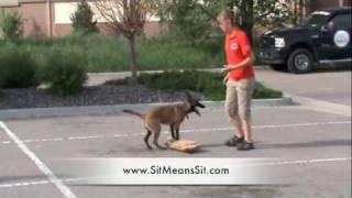 Dog Training - Awesome 14 Yr. Old Dog Trainer