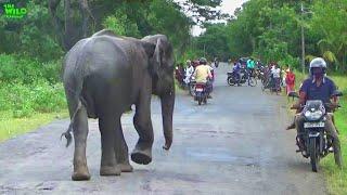 Sick wild elephant came to village, Wildlife team gets treated