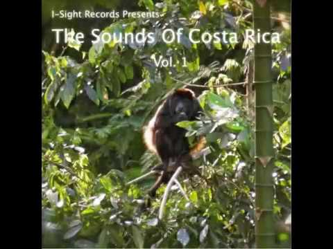 Nature Sounds  - Costa Rica caribbean jungle