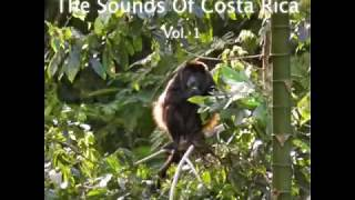 Sounds Of Paradise - Costa Rica Rainforest - Relax