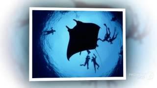 Морской дьявол  Свежий взгляд на морского дьявола(Морской дьявол Свежий взгляд на морского дьявола.Морской дьявол совершенное создание природы. Морской..., 2014-10-23T10:18:00.000Z)