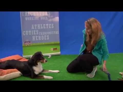 Dog Training Tips from Renee DeVilliers