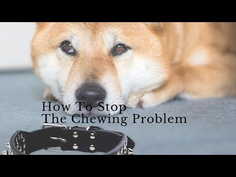 dog-training-|-how-to-stop-the-chewing-problem