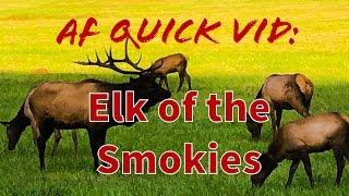 Elk of the Smokies