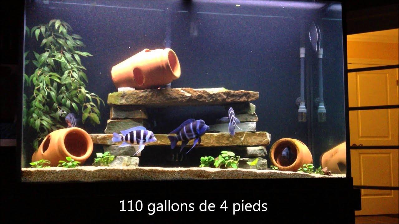 aquariums cichlid s africains youtube. Black Bedroom Furniture Sets. Home Design Ideas