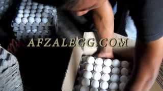 Afzal Egg Trader (Barwala) www.afzalegg.com