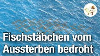 Fischstäbchen vom Aussterben bedroht