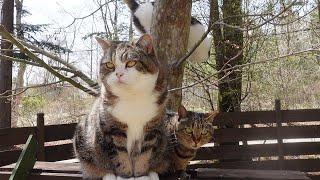お庭を満喫するねこ2。-Cats enjoy the garden2.-