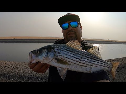 California Aqueduct Fishing For Striped Bass With The KMB130 Jerkbait
