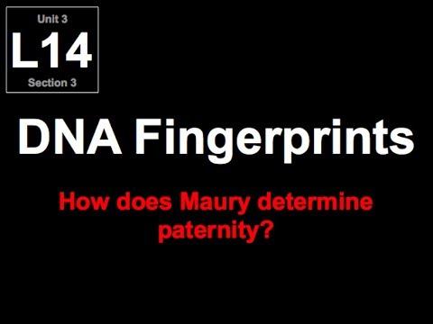 3-L14 DNA Fingerprints