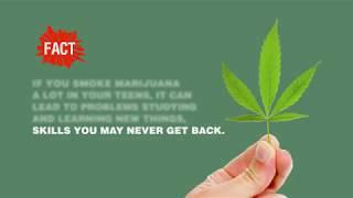 Shatter the Myths: Marijuana