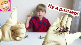 НЕ БОЮСЬ / Набор Играем вместе Рептилии и насекомые