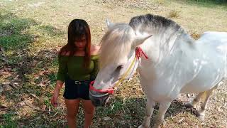 Amazing Beautiful Girl Cleaning A Horse at Horse Garden   How to Clean A Horse