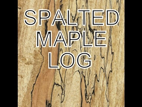 Spalted Maple Log