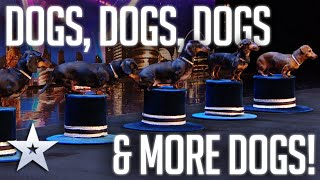 Unforgettable Audition: DANCING SAUSAGE DOGS!  BGT 2020