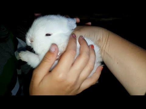Во сколько брать кролика? Спорные вопросы и ответы