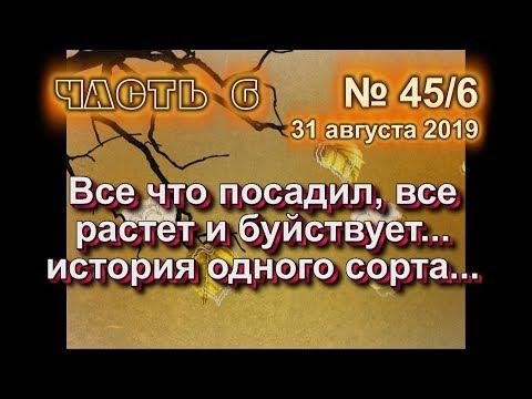 45 ч 6 Все что посадил растет и буйствует История одного сорта