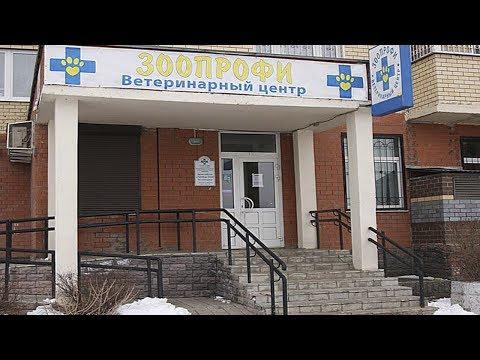 Наша Ветеринарная Клиника ЗооПрофи