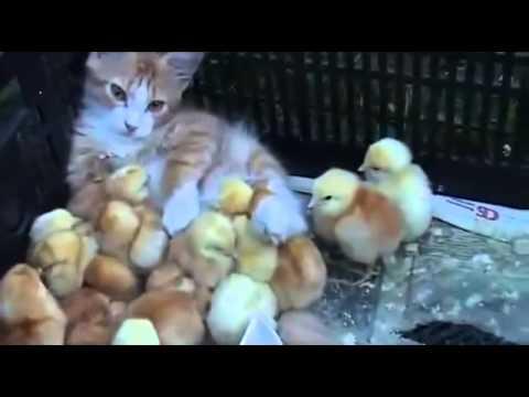 銘印作用,認貓作母 - YouTube
