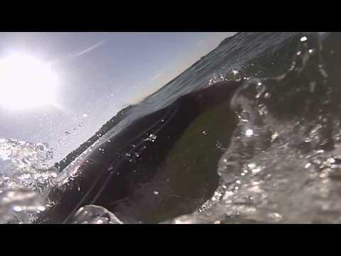 Lake Lanier Swim