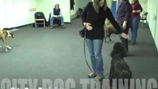 Rally At City Dog Training