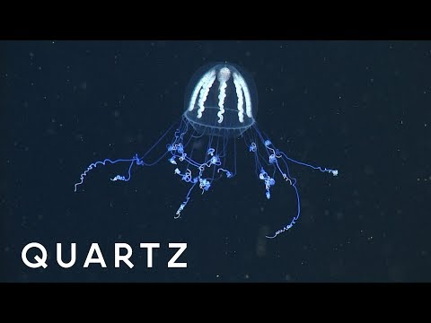 The Secret Superpowers Of Jellyfish