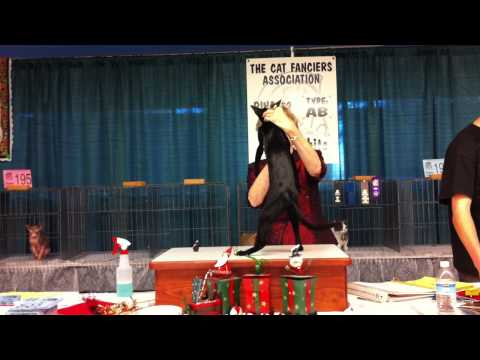 Cat Show, PDX, 2009  judging of Voodoo the Oriental Shorthair