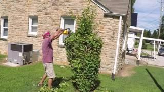 Dewalt 20V hedge trimmers #2