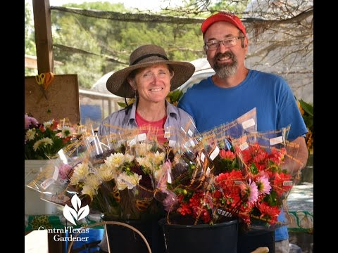 Winter Cut Flowers |Pamela and Frank Arnosky |Central Texas Gardener
