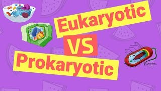 5 Key Differences of Eukaryotic and Prokaryotic Cells