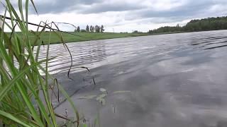 Видеоотчёт о рыбалке 26 июня 2017 года