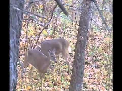 Relentless Pursuit - Whitetail Bow Hunt - Big Louie