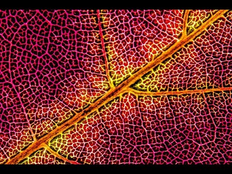 AUTUMN PHOTOGRAPHY - Macro Photography Of Backlit Leaves For Abstract Fall Photography