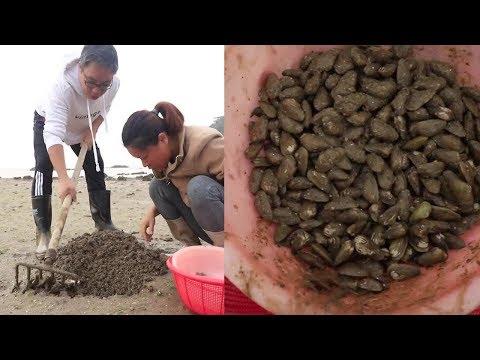 """小漁夫婦去海邊挖""""海瓜子"""",別看這東西個頭不大,個個飽滿肉肥! 【漁小仙】"""