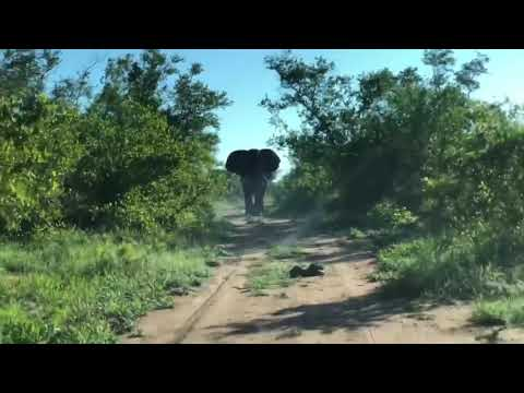 Scott Davidson - WATCH: Elephant Charges Towards Car