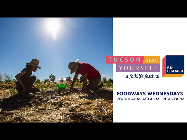 Foodways Wednesdays: Verdolagas at Las Milpitas Farm