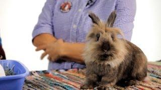 Should Your Rabbit Live Free-Range?   Pet Rabbits