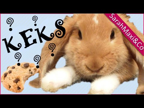 d rfen kaninchen brot fressen kaninchen s er hase lusitiges kaninchen youtube. Black Bedroom Furniture Sets. Home Design Ideas