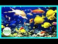Sleeping Music, Calming, Music for Stress Relief, Relaxation Music, 30 Minute Sleep Music, ✿2179D