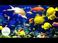 Akvariefiskar - YouTube