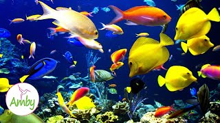 ???? Stunning Aquarium & The Best Relaxing Music - SLEEP MUSIC - HD 1080P