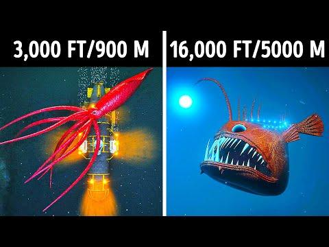 Fascinating 3D Journey to the Ocean Depths