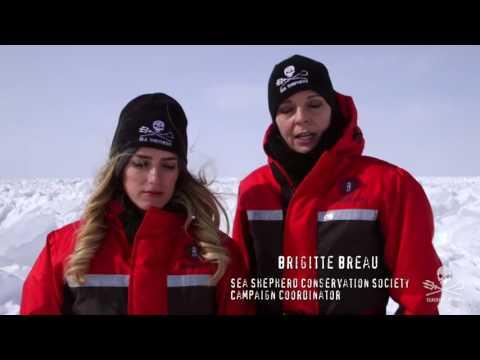 Sea Shepherd CS Operation Ice Watch Michelle Rodriguez