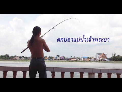 ตกปลาแม่น้ำเจ้าพระยา