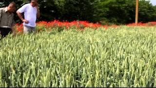 100 ц и выше биоурожай с Agroprofi в АРК