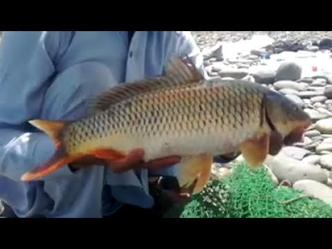 Fishing at the Indus River Pakistan May 2017