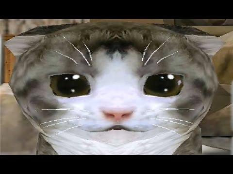 Видео Симулятор кота 3д играть онлайн бесплатно