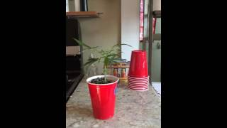 GROW HACK solo cup