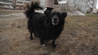 Рейд по выгулу собак(, 2019-04-12T08:18:41.000Z)