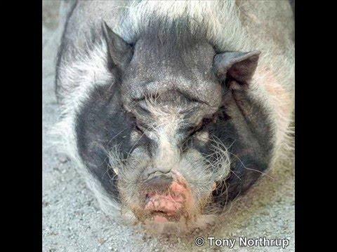 ugly animals YouTube